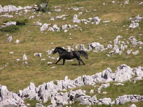 Nationalpark Velebit Wilde Pferde