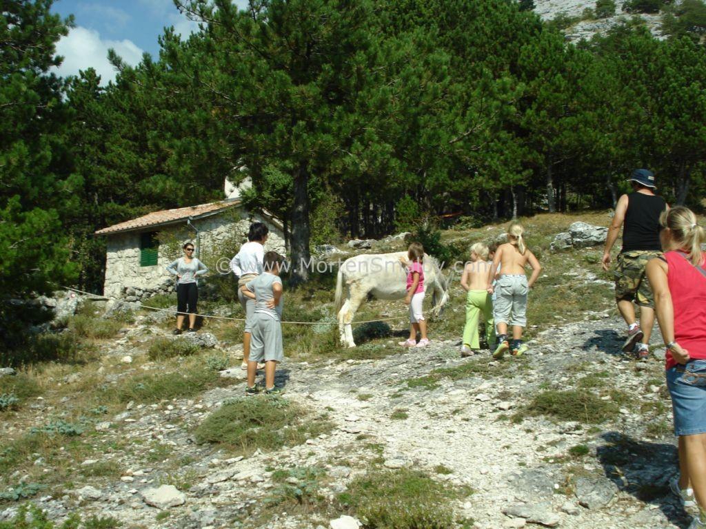 Mosor Split Das Esel