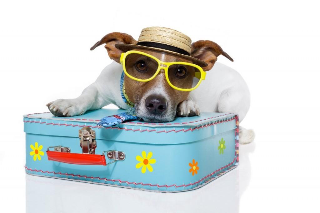 Hundefreundliche  Hotels